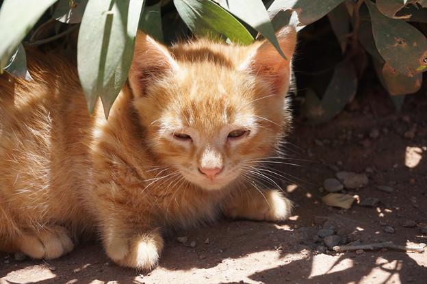 葉隠猫~モロッコ Stray Cat