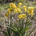 写真: 春の光