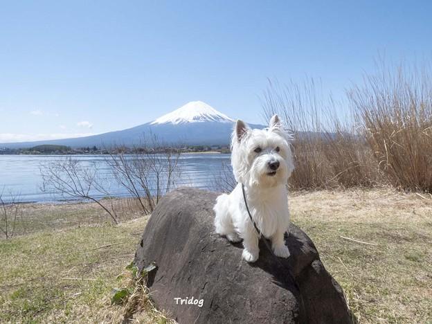はなと富士山