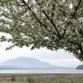 写真: ウツギと富士山