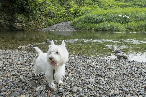 写真: 川でくつろぐ