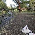 Photos: 台風の爪痕