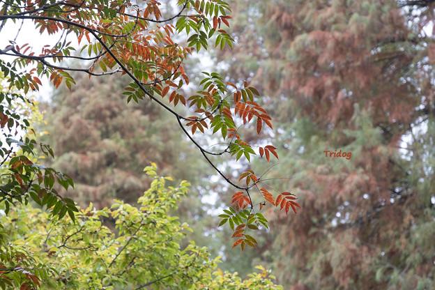井の頭の秋