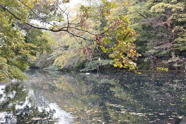 井の頭の池