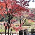 水生の紅葉