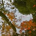 写真: 虚像の中を泳ぐ