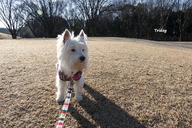 散歩は寒いけれど楽しい