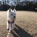 写真: 散歩は寒いけれど楽しい