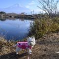 写真: タヌキ湖にて
