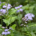 Photos: 花と蝶?