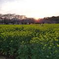 Photos: 西都原
