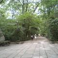 写真: 下鴨神社