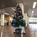 写真: 駅のクリスマスツリー