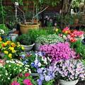 2018春の庭-1