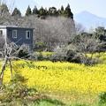 Photos: 郷の春
