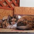 写真: ララ&ナナ「あたしたち、ニャかよし姉妹なの」