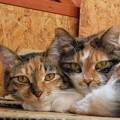 写真: ララ&ナナ「誰もあたしたちの仲を引き裂けないのよ」