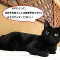 Photos: ブラッシング大好き!