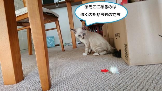 写真: シナモン2