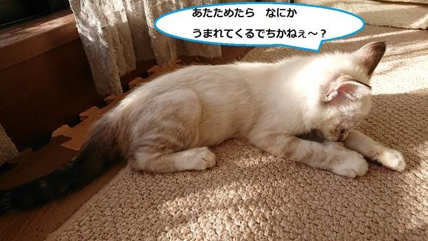 写真: シナモン4