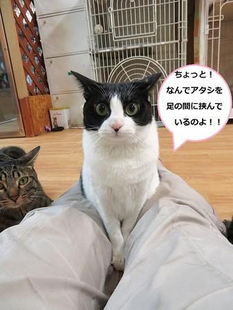 あきひめ6