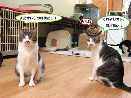 ココア&サブレ&ミレイ(友情出演?)