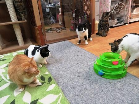 おもちゃ独り占め!