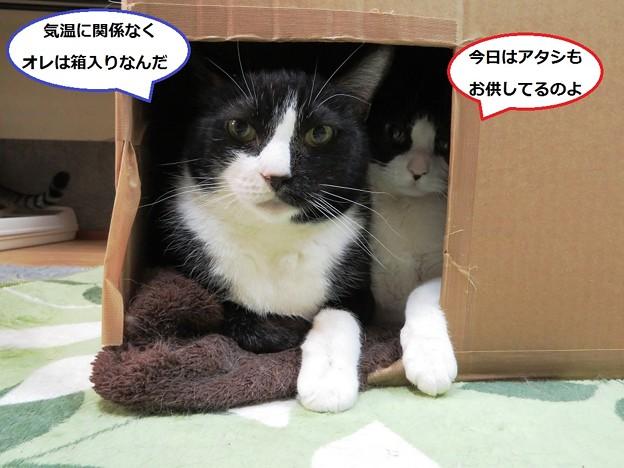 写真: ムース&あきひめ