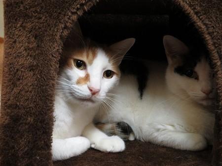 福寿&柊「ここは隠れ家なんだよね」