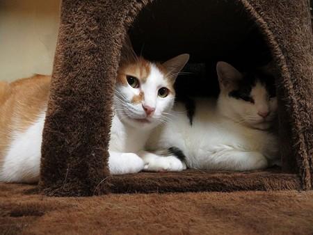 福寿&柊「あんまり覗きに来ないでくれないかな」