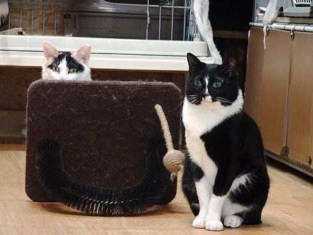 柊「防御壁に身を隠してるのよ」 らいこう「ぼくねー、見張り番!!」