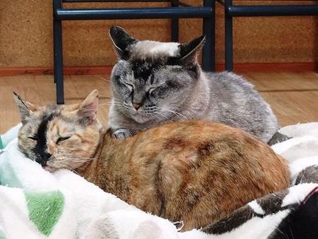 花梨&ミレイ「アタシたち、仲良しなのよ」