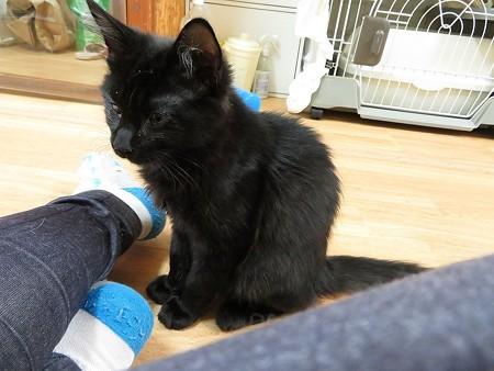 アスラン「猫も好きだけど、ヒトも大好きなんだ」