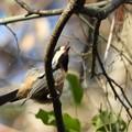 野鳥 44