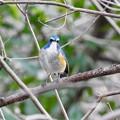 野鳥 49