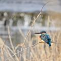 写真: 野鳥 50