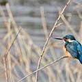 写真: 野鳥 51