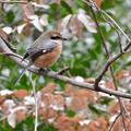 写真: 野鳥 54