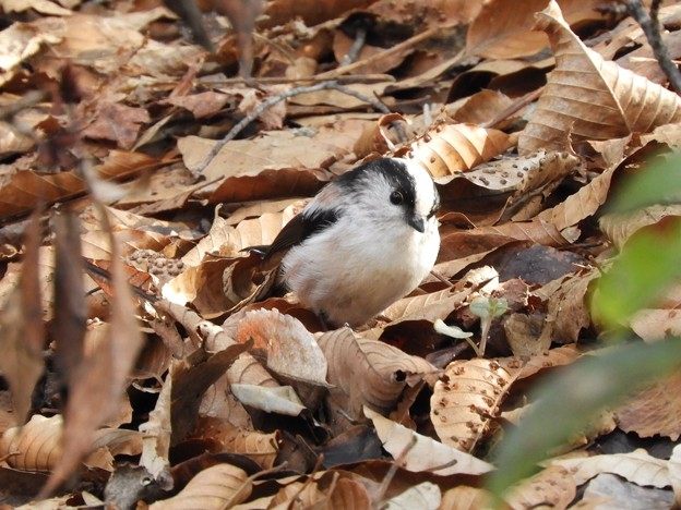 Photos: 野鳥 55