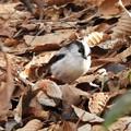 写真: 野鳥 55