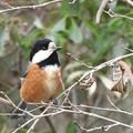 写真: 野鳥 57