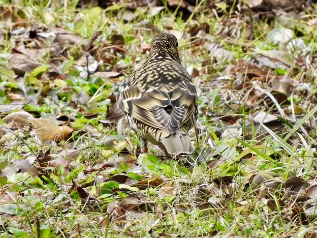 写真: 野鳥 58