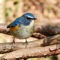 写真: 野鳥 60