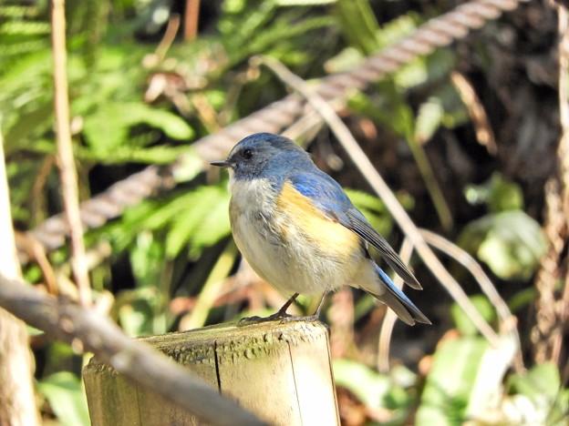 写真: 野鳥 61