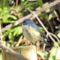 野鳥 61