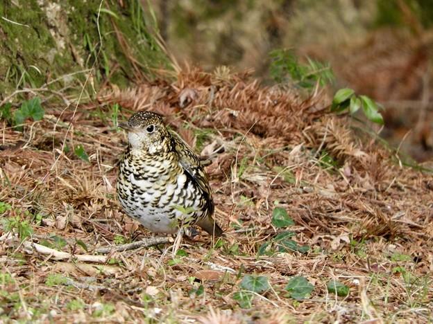 Photos: 野鳥 62