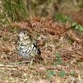 写真: 野鳥 62