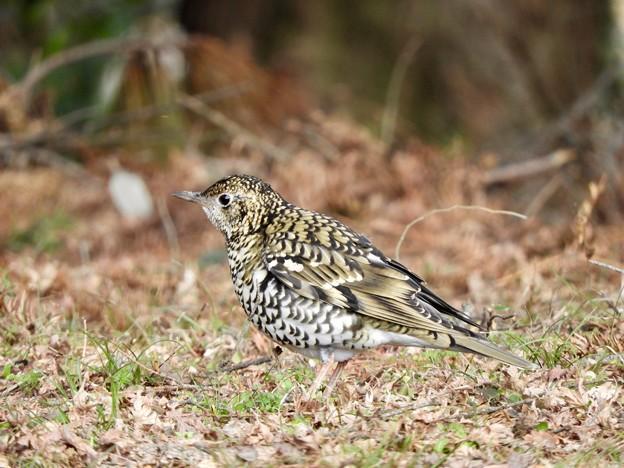 写真: 野鳥 64