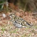 Photos: 野鳥 64