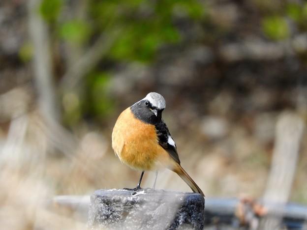 写真: 野鳥 66